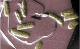 Bakteri Listrik Untuk Bio-Baterai: Sebuah Terobosan baru dalam Clean Energy