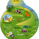 Ternyata EBT Bahan Untuk Biomassa
