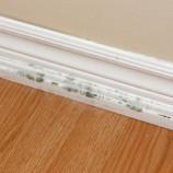 Indoor Air Quality : Jadilah Sehat di Rumah Anda