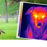 Termografi Hewan dapat Menjadikan Hewan Peliharaan Anda Selalu Sehat!