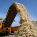 Biomassa! Energi Biologis dari Organisme