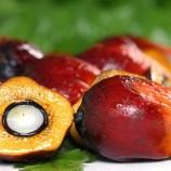 Sawit Sumbang 50% Bahan Baku Produk di Supermarket
