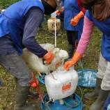 Bagaimana Cara Kalibrasi Pestisida?