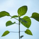 Pengertian Lingkungan Hidup, Kerusakan Lingkungan, dan Pelestarian Lingkungan